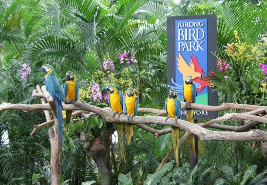 vé-jurong-bird-park