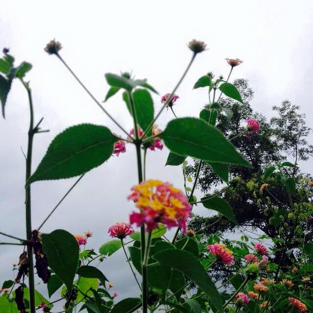 """Núi Ba Vì điểm tránh nóng gần nhất, """"chất"""" nhất Hà Nội"""