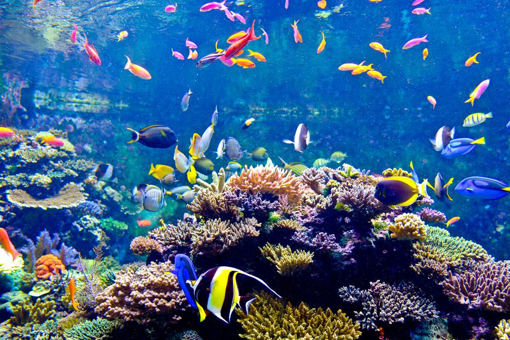 S.E.A. Aquarium ( kinh nghiệm du lịch singapore )