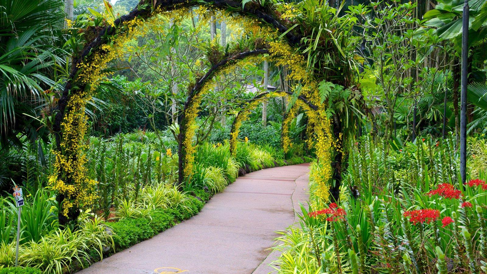 Vườn thực vật Singapore - Botanic Garden ( kinh nghiệm du lịch singapore )