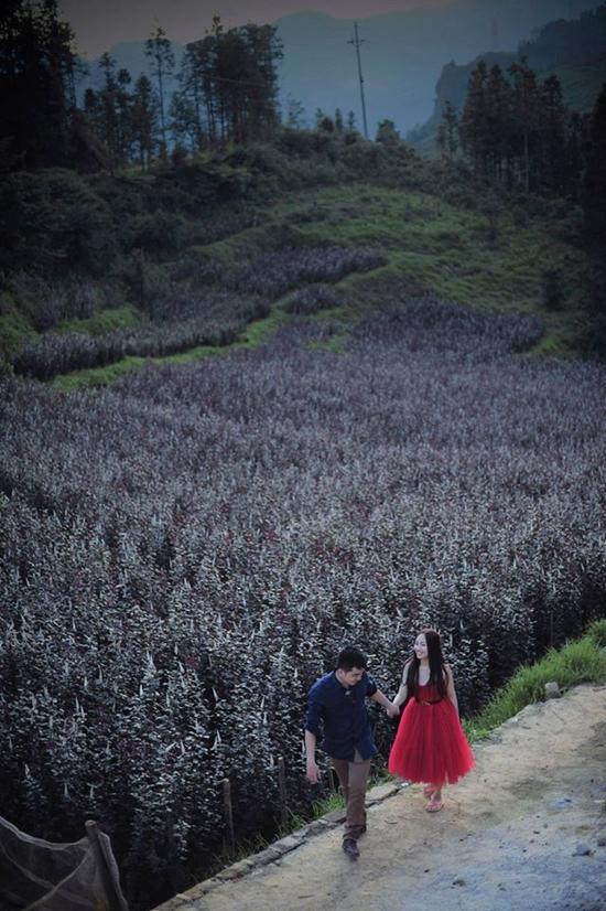 Vườn hoa hồng Sapa - Du lịch Sapa cho cặp đôi