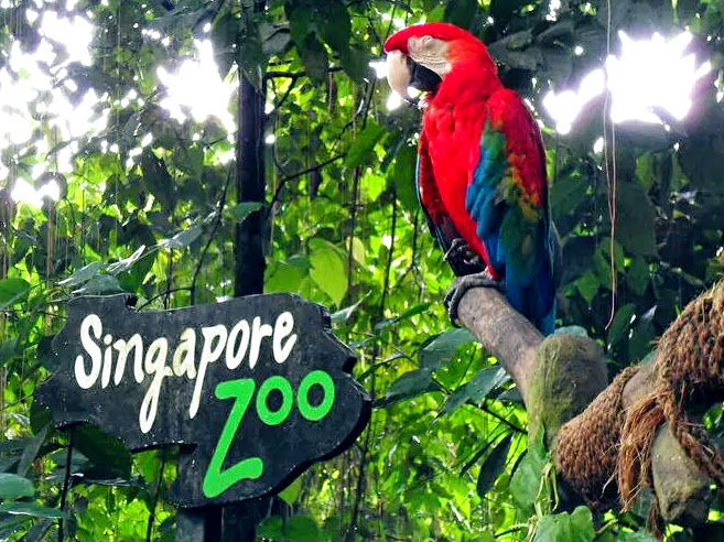 Singapore Zoo ( kinh nghiệm du lịch singapore )