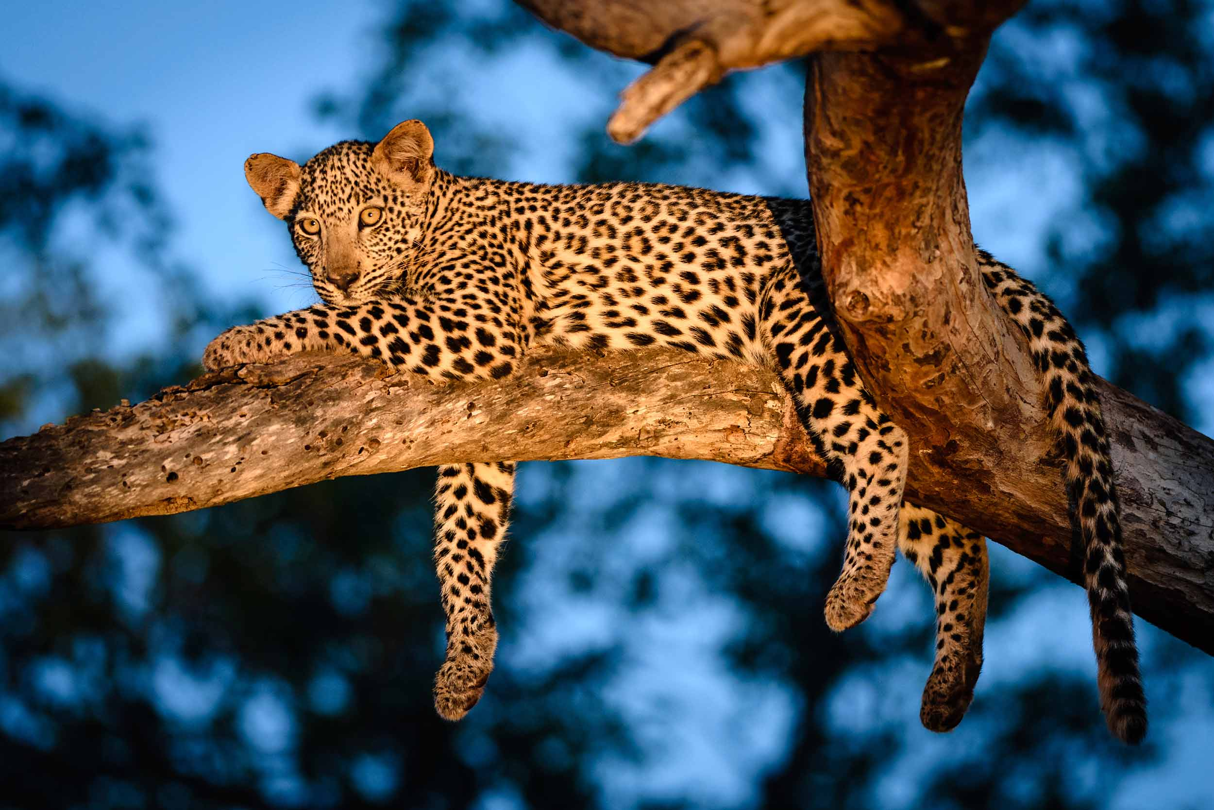 Vé Vườn thú đêm Night Safari Singapore