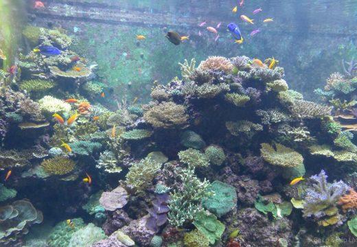 Vé tham quan S.E.A Sea Aquarium Singapor