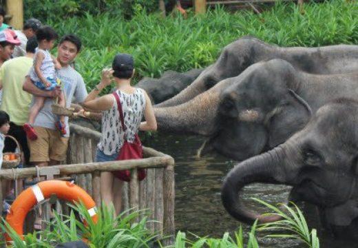 Ăn uống ở vườn thú Singapore Zoo