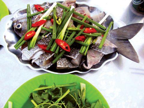 cá tầm ma đặc sản đảo Lý Sơn