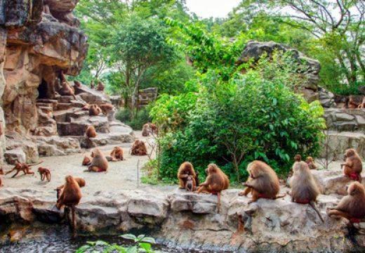 Cách mua vé và ăn uống tạiSingapore Zoo