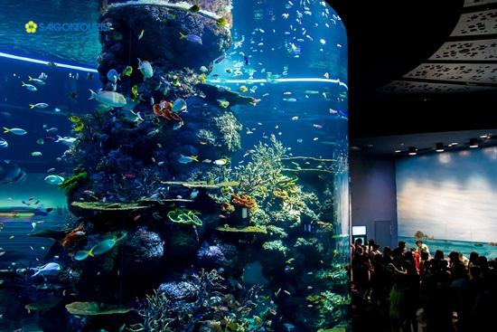 Cách tham quan và hình thức vui chơi tại sea aquarium