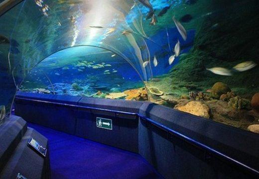 Đi đến Sea aquarium singapore bằng phương tiện gì