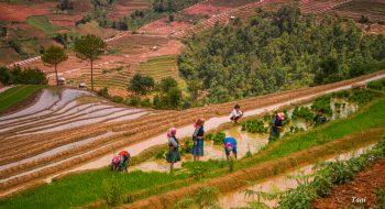 Tour Hà Nội Sapa Mù Cang Chải