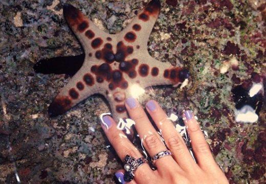 Hãy đắm mình xuống đáy biển tại sea aquarium singapore và khám phá hơn 100.000 sinh vật biển