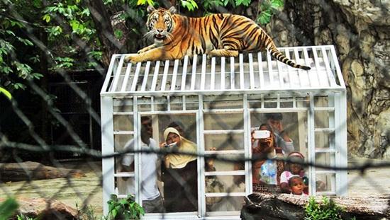 Kinh nghiệm đi 2 khu Marine Park và Safari Park ở vườn thú Bangkok