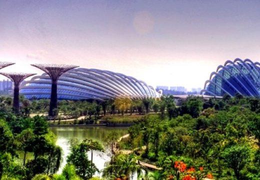 Cách tham quan Gardens by the Bay khi đi du lịch Singapore