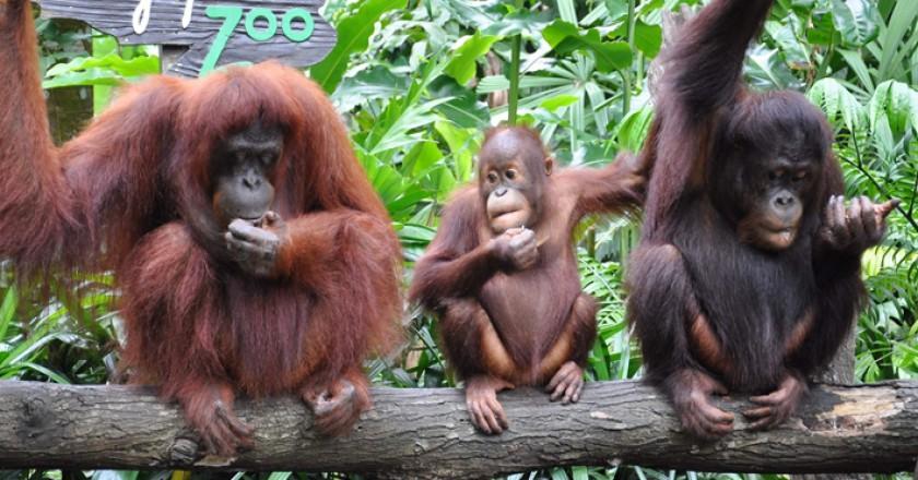 Vé Singapore Zoo - Vé tham quan vườn thú Singapore giá rẻ