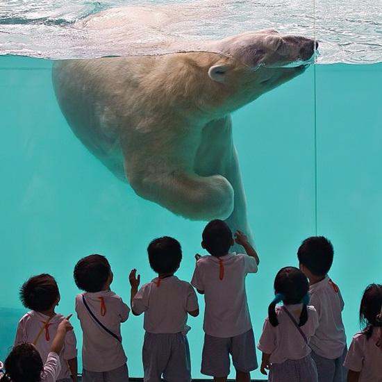 Hướng dẫn cách đi thăm quan sở thú Singapore Zoo