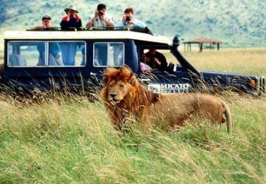 Lịch trình tham quan safari world bangkok