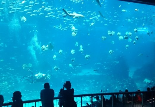 Cách đi tham quan thủy cung sea aquarium singapore