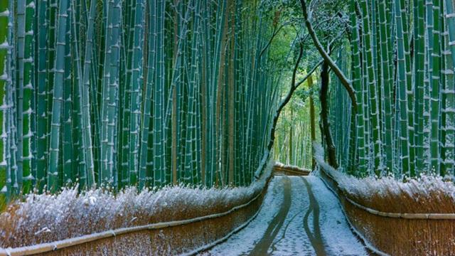 rừng tre Sagano