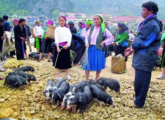 Săn lúa chín ở Sapa vào ngày chủa nhật nhớ ghé qua chợ phiên bắc hà