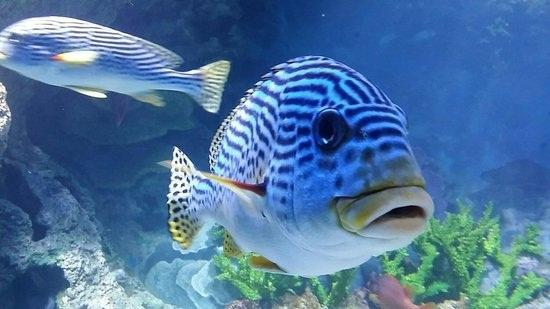 Hướng dẫn tham quan thủy cung S.E.A. Aquarium Singapore