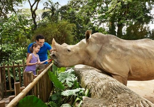 Top 3 những sở thú ở Singapore khiến trẻ em thích mê