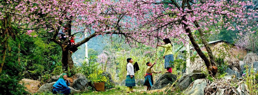 Tour Mộc Châu 3 ngày 2 đêm ngắm hoa đào hoa mận 2017